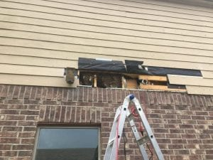 Honey Bee Removals in Fort Bend County